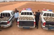 الهيئة العامة للبيئة تطلق سراح 1500 سلحفاة برية في محمية طبيعية