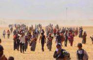 معاناة وويلات مئات العائلات التى شردت واضطهدت على أيدي الدواعش الإرهابيين